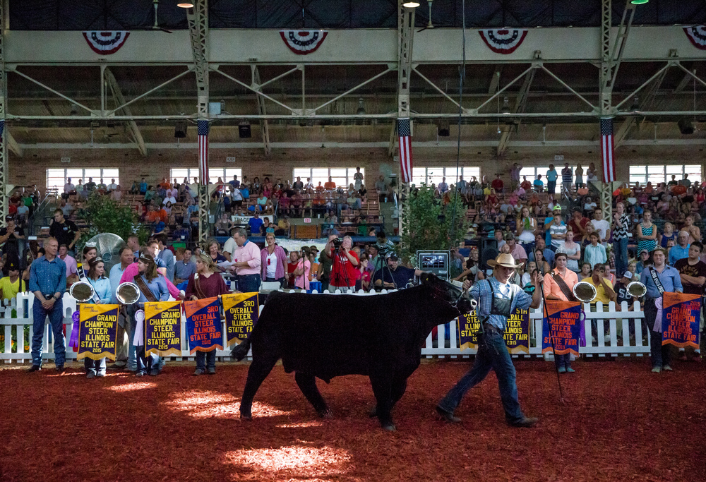 Participants make their way into the arena for judging in the Jr. Grand Champion Steer competition during the Parade of Champions in the Coliseum at the Illinois State Fairgrounds, Saturday, Aug. 15, 2015, in Springfield, Ill. Justin L. Fowler/The State Journal-Register