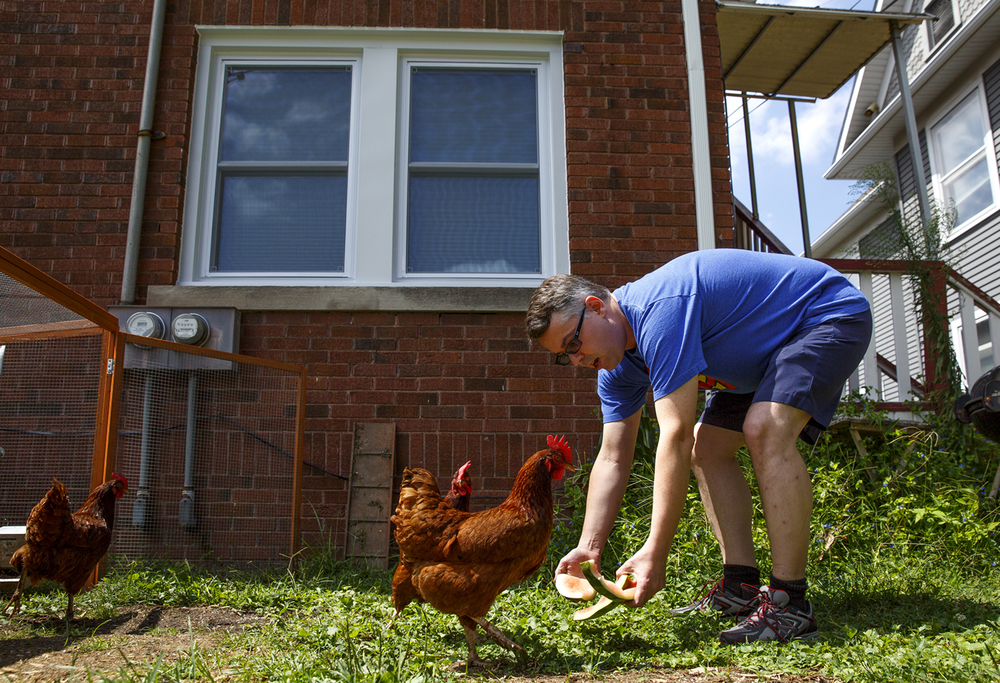 John Champaign hands watermelon rinds to his chickens, a treat for the three Rhode Island Reds he raises in the backyard of his Springfield home Monday, Aug. 10, 2015. Rich Saal/The State Journal-Register