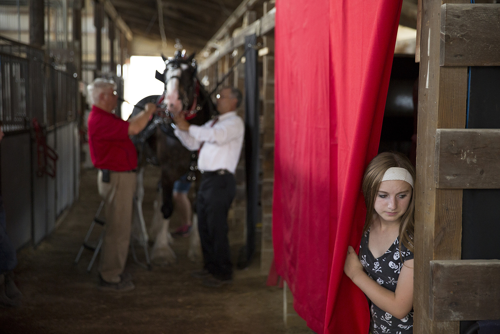 Lena Hastings peers from behind a curtain in the barn where her grandfather, Don Hastings, left, and Terry McElhinney prepare a Black Clydesdale mare for competition in the Ladies Cart class in the Coliseum at the Illinois State Fair Monday, August 17, 2015.  Rich Saal/The State Journal-Register