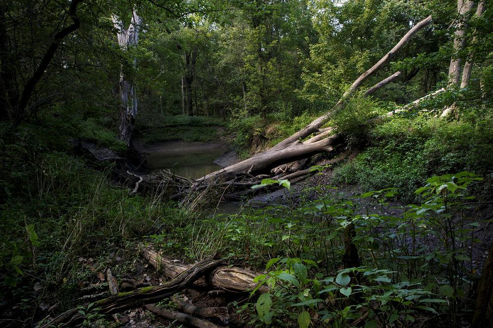 A dead tree bridges the banks of Brush Creek on city-owned property east of Springfield that will be flooded if Hunter Lake receives final approval. Ted Schurter/The State Journal-Register