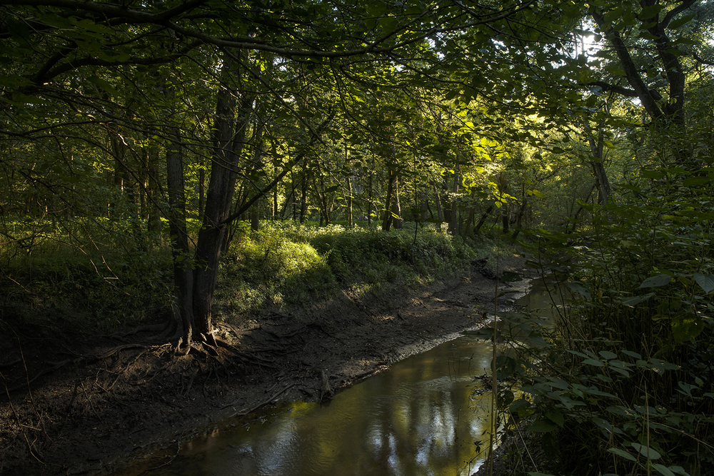 Sunlight filters through to the banks of Brush Creek on property that will be submerged if Hunter Lake is approved.  Ted Schurter/The State Journal-Register