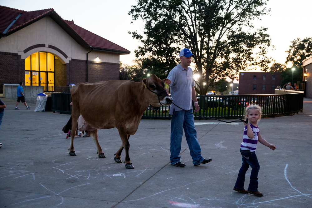 Abby Yoder, 3, walks a jersey cow with the help of her father Eric Yoder, as she practices for the costume contest at the Illinois State Fair, Friday, Aug. 21, 2015, in Springfield, Ill. Justin L. Fowler/The State Journal-Register