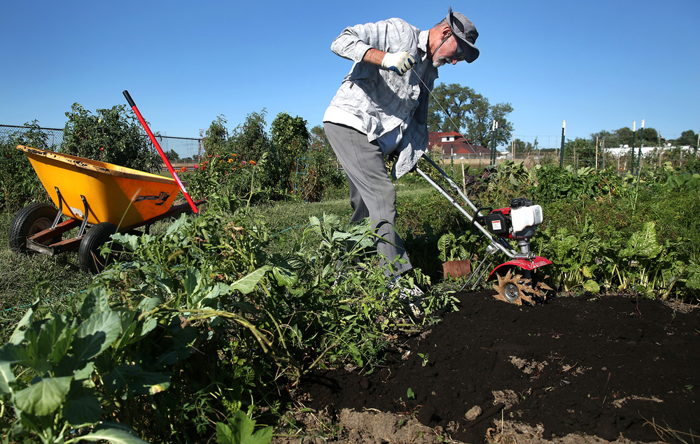 "Dick McDaniel, who maintains four plots in the community garden in the infield of the Illinois State Fairgrounds mile track, tills manure into the soil Tuesday, August, 25, 2015. Employees of the Bureau of Land and Water Resources who manage the garden, have received layoff notices effective September 30. The garden will probably be closed early, preventing fall crops from being harvested. ""This should go on,"" McDaniel said, who was hopeful a solution could be found. David Spencer/The State Journal-Register"