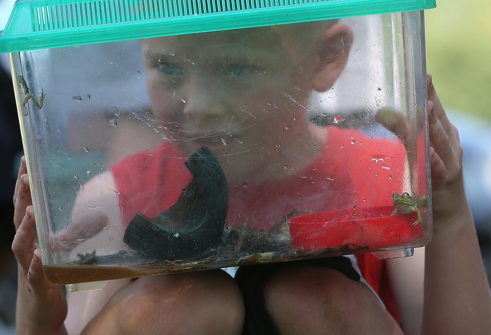 Tucker Dennis, 5, of Auburn, was absolutely captivated while peering into a terrarium containing several green frogs that were brought to compete in the Frog Jumping contest at Union Park as part of the picnic. David Spencer/The State Journal-Register