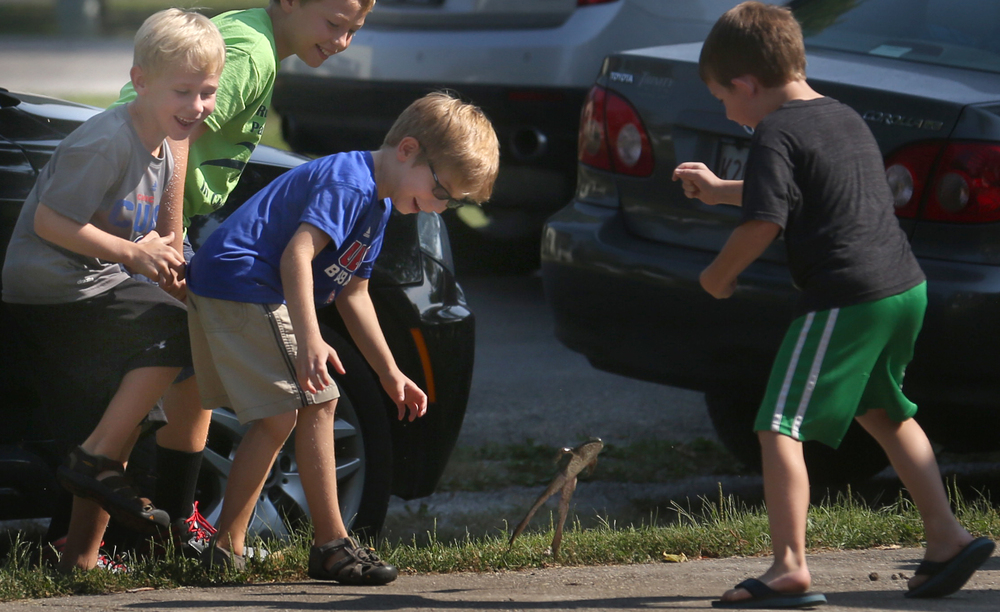 Children, including brothers Eli Schacht, 7 at center and Ezra Schacht, 6 at far left, were having a great time trying to capture a jumping bullfrog who apparently had other ideas other than to take part in the jumping contest at Union Park. David Spencer/The State Journal-Register