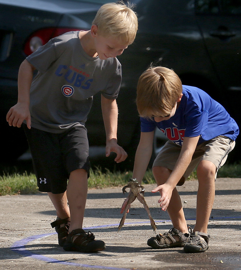 Brothers Eli Schacht, 7 at right and Ezra Schacht, 6, both of Auburn, prepare to capture a jumping bullfrog who seemed intent on making an escape rather than taking part in practice before the start of the frog jumping contest at Union Park. David Spencer/The State Journal-Register