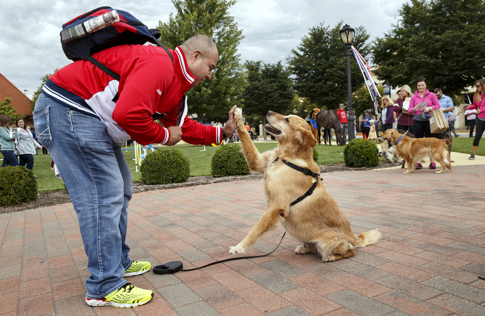 "Tommy Rector gets a high five from his dog Bullitt in front of the judges at Union Square Park during the Abraham Lincoln Presidential Library and Museum celebration of ""Pets in the White House"" Saturday, Sept. 12, 2015. Visitors could also make toys for their cats and dogs, get their faces painted, have their pet's nails trimmed and view demonstrations of dogs doing search and rescue, military work and agility trials. Ted Schurter/The State Journal-Register"