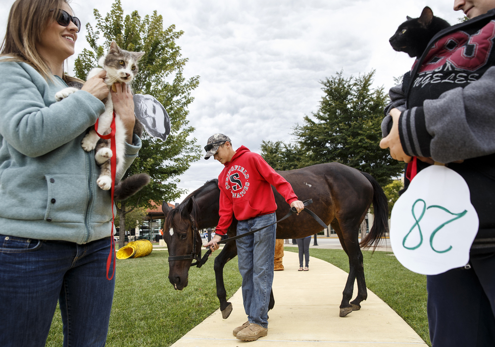 "Jake Whitlock and his horse Missy bring up the rear of the Pet Parade as it makes it way toward the judges during the Abraham Lincoln Presidential Library and Museum celebration of ""Pets in the White House"" at Union Square Park Saturday, Sept. 12, 2015. Ted Schurter/The State Journal-Register"