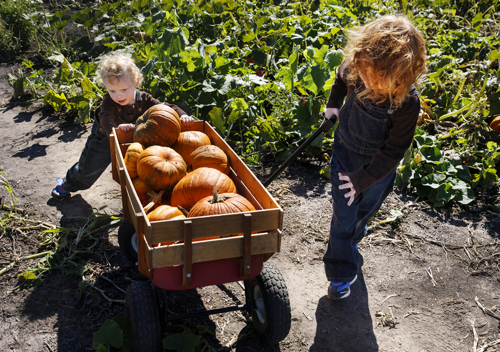 Twins Wyatt, left, and Hunter Parcelle push and pull their wagon full of pumpkins out of Gail's Pumpkin Patch Sunday, Sept. 13, 2015.  Ted Schurter/The State Journal-Register
