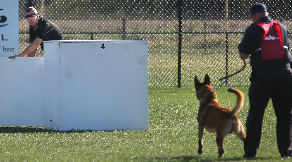 "Springfield Police officer Tim Ealey, playing the role of a suspect, emerges from a box after ""Thor"", a Belgian Malinois who is the partner of Springfield Police officer Tim Day made a successful hit on Tuesday morning at Spartan Sports Park .David Spencer/The State Journal-Register"