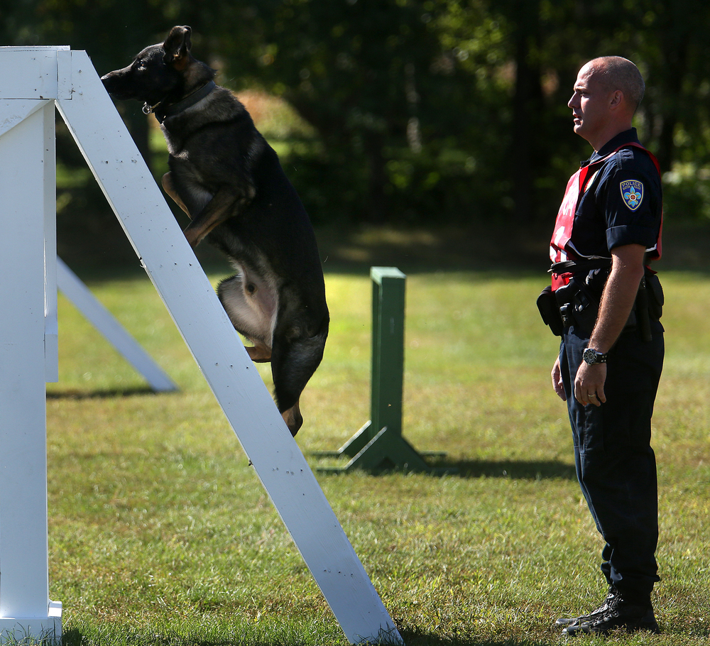 Baton Rouge K-9 police officer Tom Ricken watches as Zorro climbs a ladder obstacle on the course at LLCC Tuesday. David Spencer/The State Journal-Register