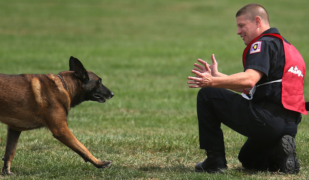 "On the Obedience course at LLCC, Charleston, Ill Police Department K-9 officer Heath Thornton prepares to embrace his partner ""Ivan"" after competing on Tuesday. David Spencer/The State Journal-Register"