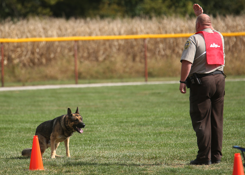 "On the Obedience course at LLCC, Effingham County Sheriff's Office K-9 officer Rob Rich signals for his dog ""Justus"" while competing Tuesday.David Spencer/The State Journal-Register"