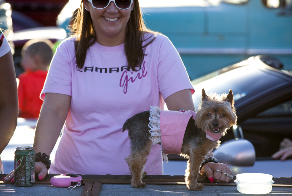 """She was raised on car shows,"" Tammy Deilkes says of her Yorkie, Chloe, who waited for the Route 66 Mother Road Festival cruise to begin Friday, Sept. 25, 2015 in the Capital City Shopping Center parking lot. Rich Saal/The State Journal-Register"