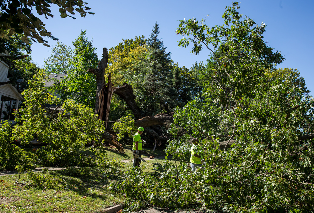 A crew from Springfield Public Works assess the status of a massive tree that collapsed in the 800 block of West Jefferson Street, Wednesday, Sept. 30, 2015, in Springfield, Ill. Justin L. Fowler/The State Journal-Register