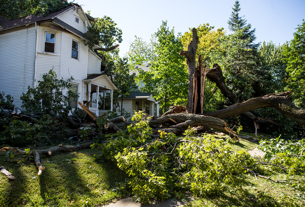 Witness say that the tree that collapsed in the 800 block of West Jefferson Street came down in three different sections over a matter of minutes went it collapsed over the roadway, Wednesday, Sept. 30, 2015, in Springfield, Ill. Justin L. Fowler/The State Journal-Register