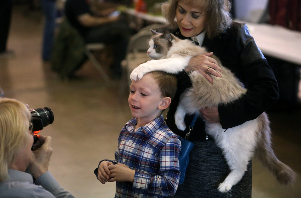 A helpful paw belonging to Eric, a Ragdoll cat held by Cynthia McAlpine of Springfield, is draped on the forehead of Brady Reid, 5, of Springfield while he gets his photo taken. David Spencer/The State Journal-Register