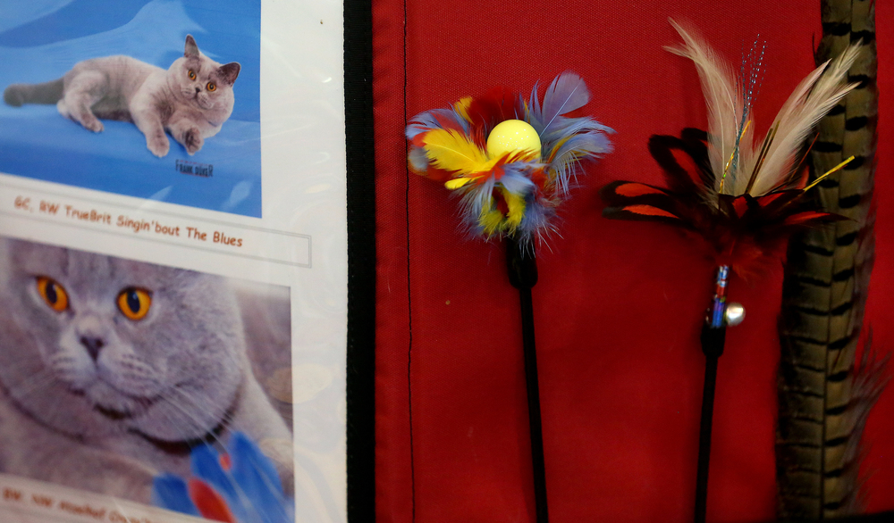 A display of feathered devices used to get a felines attention were displayed in the kennel area of one participant at the cat show on Sunday. David Spencer/The State Journal-Register