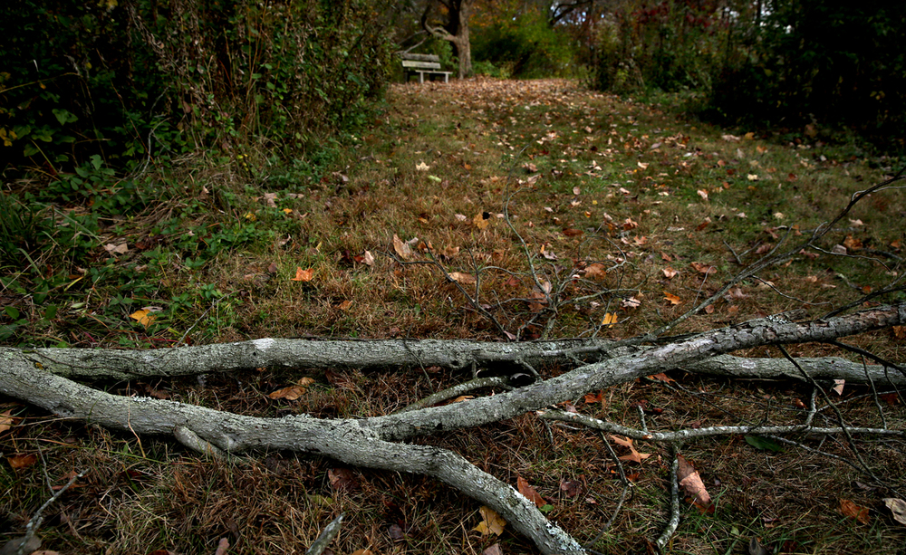 Recent winds have knocked over several rotten tree limbs at the garden this fall, including this one lying across-but not blocking- one of the wide pedestrian paths connected to the Lake Trail at Lincoln Memorial Garden on Thursday, Oct. 29, 2015. David Spencer/The State Journal-Register