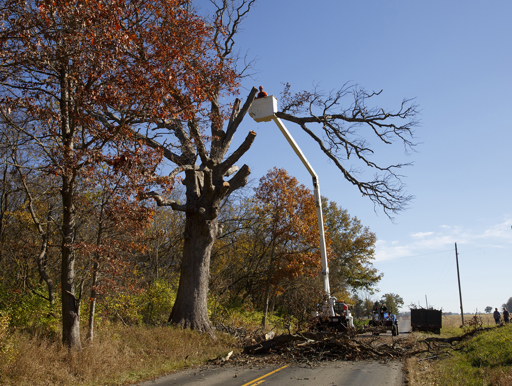 A large branch from the Gudgel Oak tree falls to the ground Monday, Nov. 2, 2015 on Gudgel Road in Menard County. The white oak said to be 260 years old suffered damage during recent drought years and died. Rich Saal/The State Journal-Register