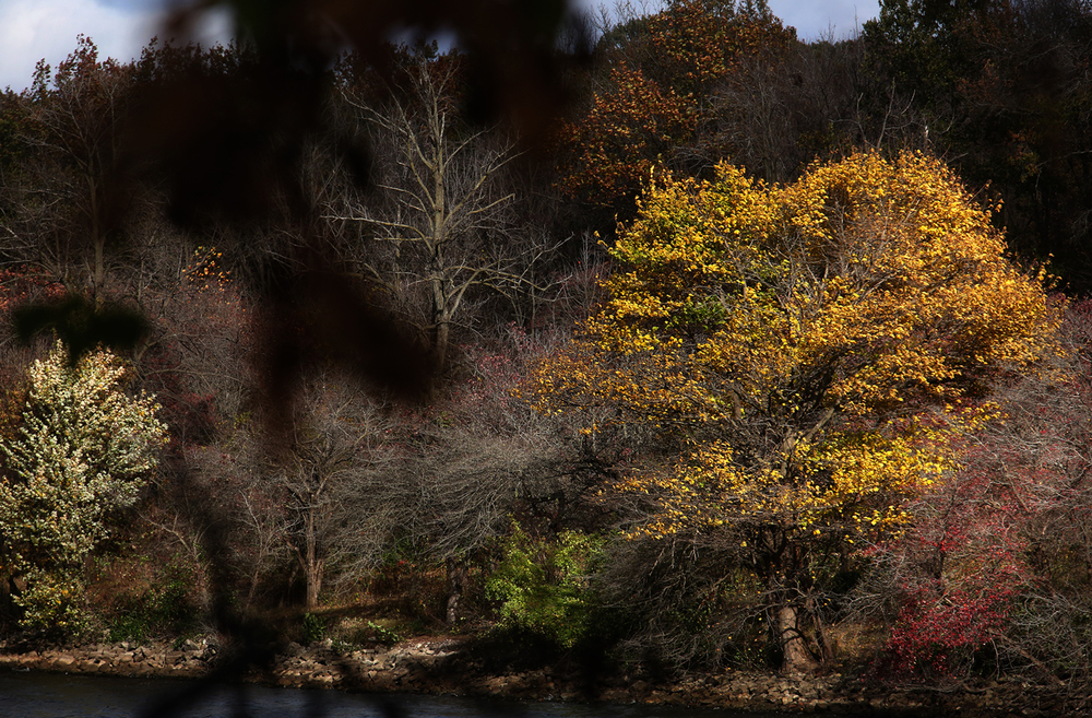 A brief burst of sunlight lights up a tree sporting yellow leaves located on the shore of Lake Springfield at Lincoln Memorial Garden on Thursday, Oct. 29, 2015. David Spencer/The State Journal-Register