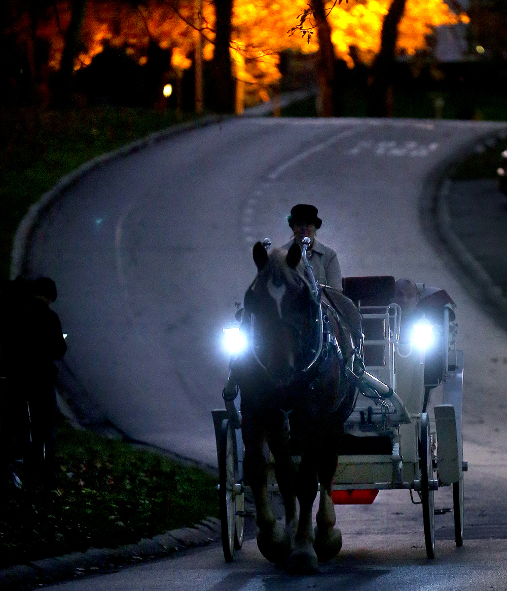 Danielle Londrigan of Red Gate Farm was at the reins steering Bud, a Belgian draft horse, around Washington Park while taking the Selinger family of Springfield on a ride early Friday evening, Nov. 6, 2015. Carriage rides lead by Belgian draft horses pulling a vintage French vis-à-vis style carriage by Petersburgh's Red Gate 