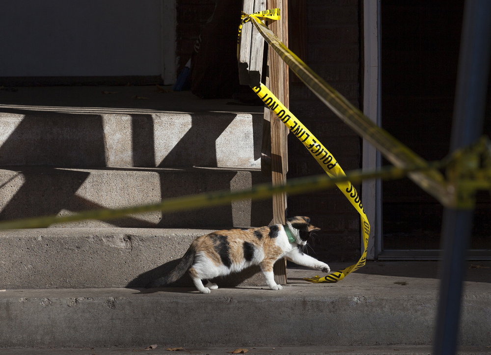 A cat is entertained by the crime scene tape at Eighth and Phillips streets where a homicide took place Monday, Nov. 2, 2015. Rich Saal/The State Journal-Register