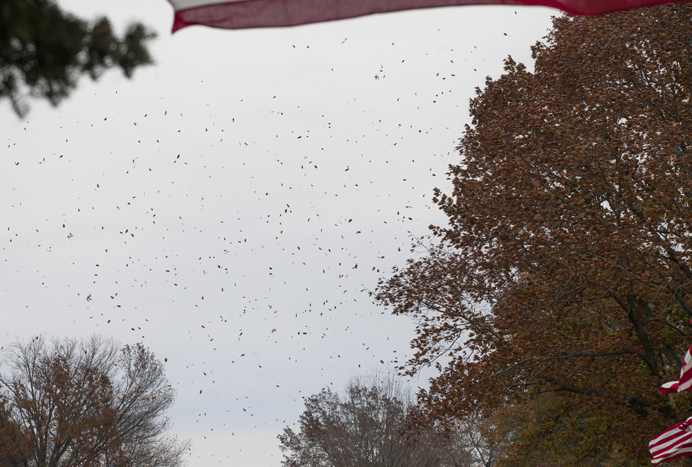 Leaves blown by gusting wind fly across Camp Butler National Cemetery during the Veterans Day Ceremony Wednesday, Nov. 11, 2015. Rich Saal/The State Journal-Register