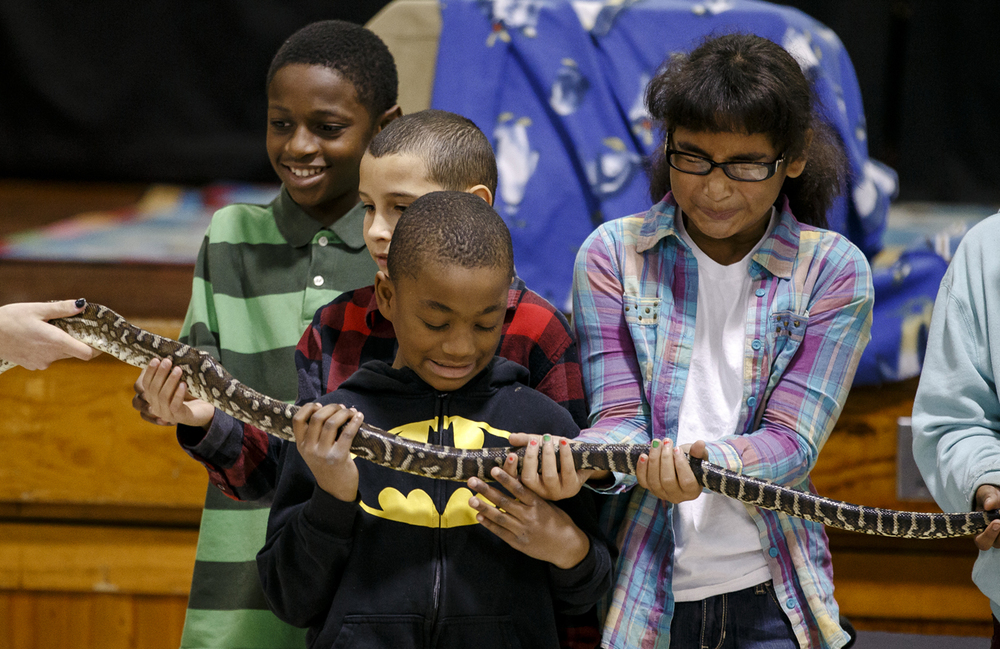 Black Hawk Elementary School students Damarcus Lucas, 9, left, Vaydin Rhone, 9, Shamar Robinson, 8, center, and Lillie Clark, 10, right, get an up close experience with a carpet python named Bobbi-Bobbi during an Australian Animals Assembly put on by Wildlife Encounters at Black Hawk Elementary, Tuesday, Dec. 15, 2015, in Springfield, Ill. The students were treated to the assembly for showing growth in reading and math as well as good behavior. Justin L. Fowler/The State Journal-Register