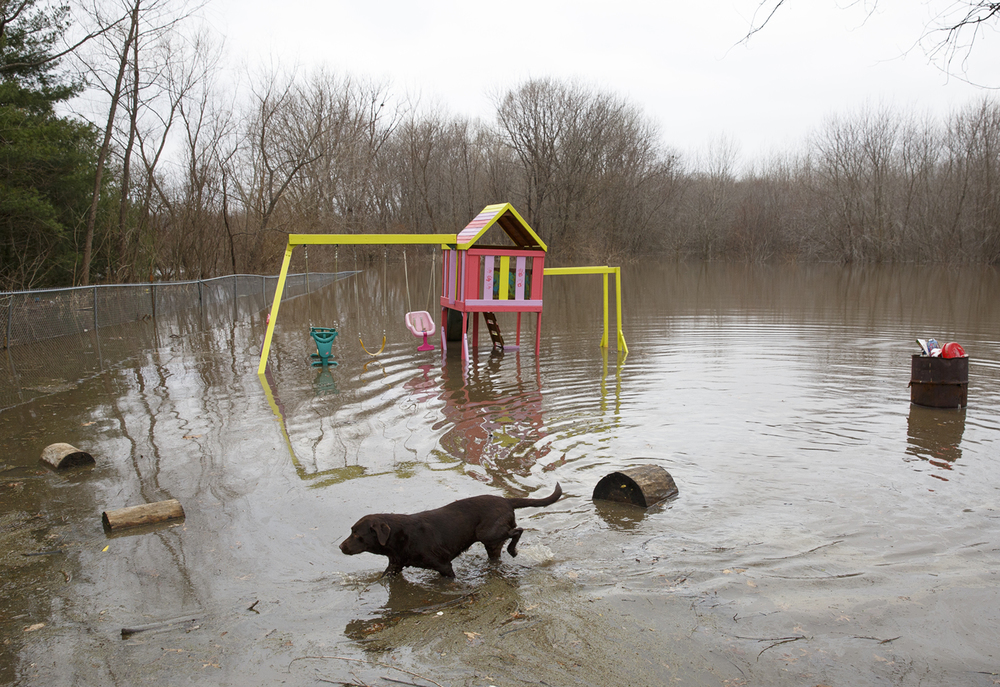The Griffitts family dog walks through water from the rising Sangamon River in the backyard of their home in the Holiday Estates subdivision in Spaulding Wednesday, Dec. 30, 2015. Rich Saal/The State Journal-Register