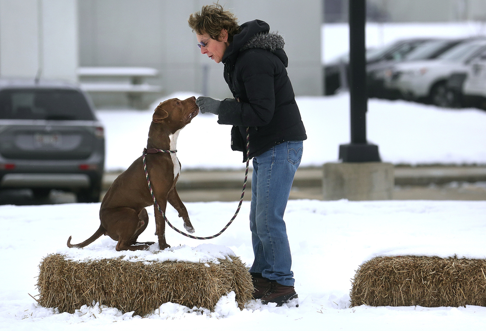 "Friends of Sangamon County Animal Control board member and long-time shelter volunteer Diana Gray of Rochester works on ""place"" training with Spencer, a one-year-old Pit Bull mix outside the facility in Springfield on Friday, Jan. 22, 2016. The Capital Area Association of Realtors donated $17,000 to the Friends group last summer which is already being put to use by the organization towards training, public outreach, adoption fee subsidization, rescues, transportion, medical assistance and other needs. David Spencer/The State Journal-Register"