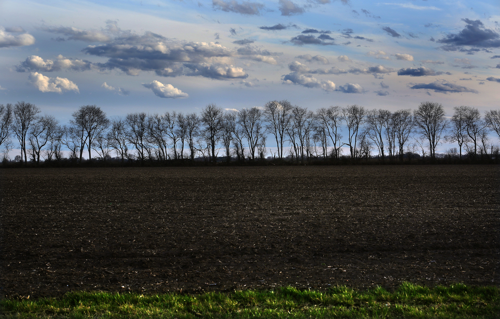 A view of a treeline dividing farmland looking due south along New City Rd near I-55 in Chatham. Photographed on Wednesday, March 16, 2016. David Spencer/The State Journal Register