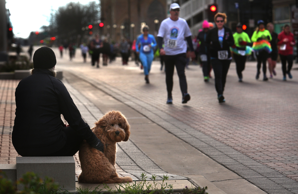 Spectator Michelle Keokham of Springfield brought along her dog Louie, a Mini Golden Doodle, and sat along Capital Ave. during the race Saturday morning. Keokham's husband Songkane Keokham was in the race. David Spencer/The State Journal Register