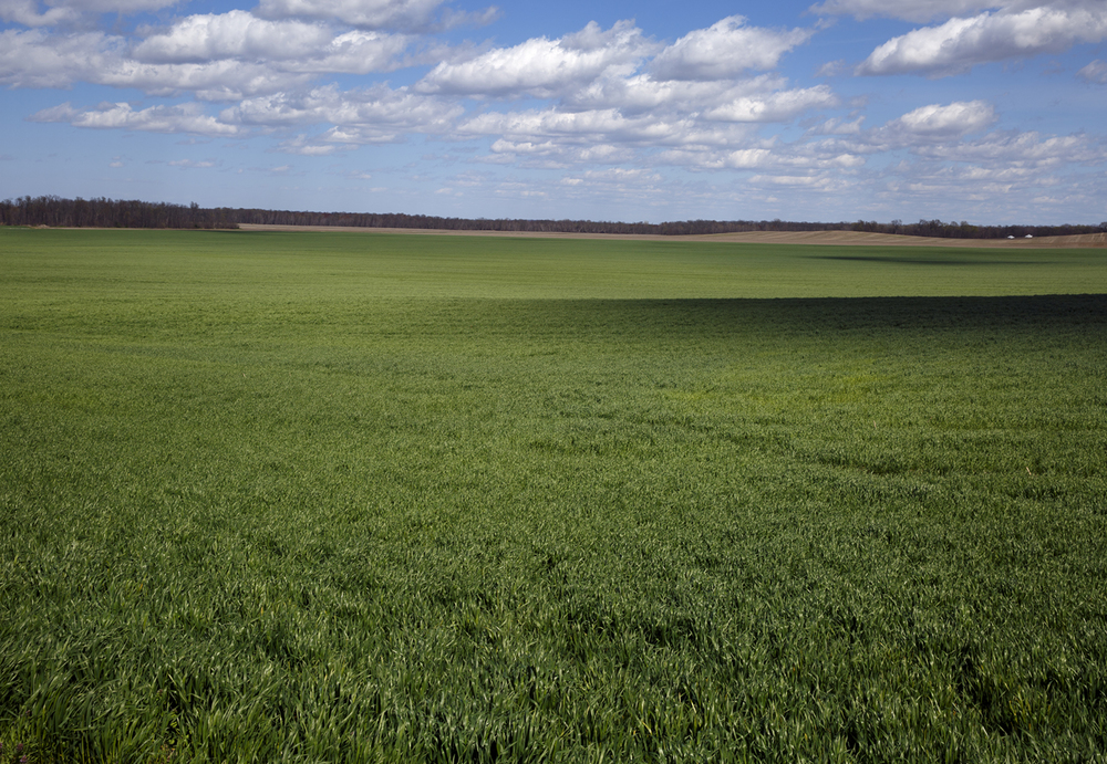 A field of verdant winter wheat stretches to the horizon in Clinton County Saturday, April 2, 2016. Rich Saal/The State Journal-Register.