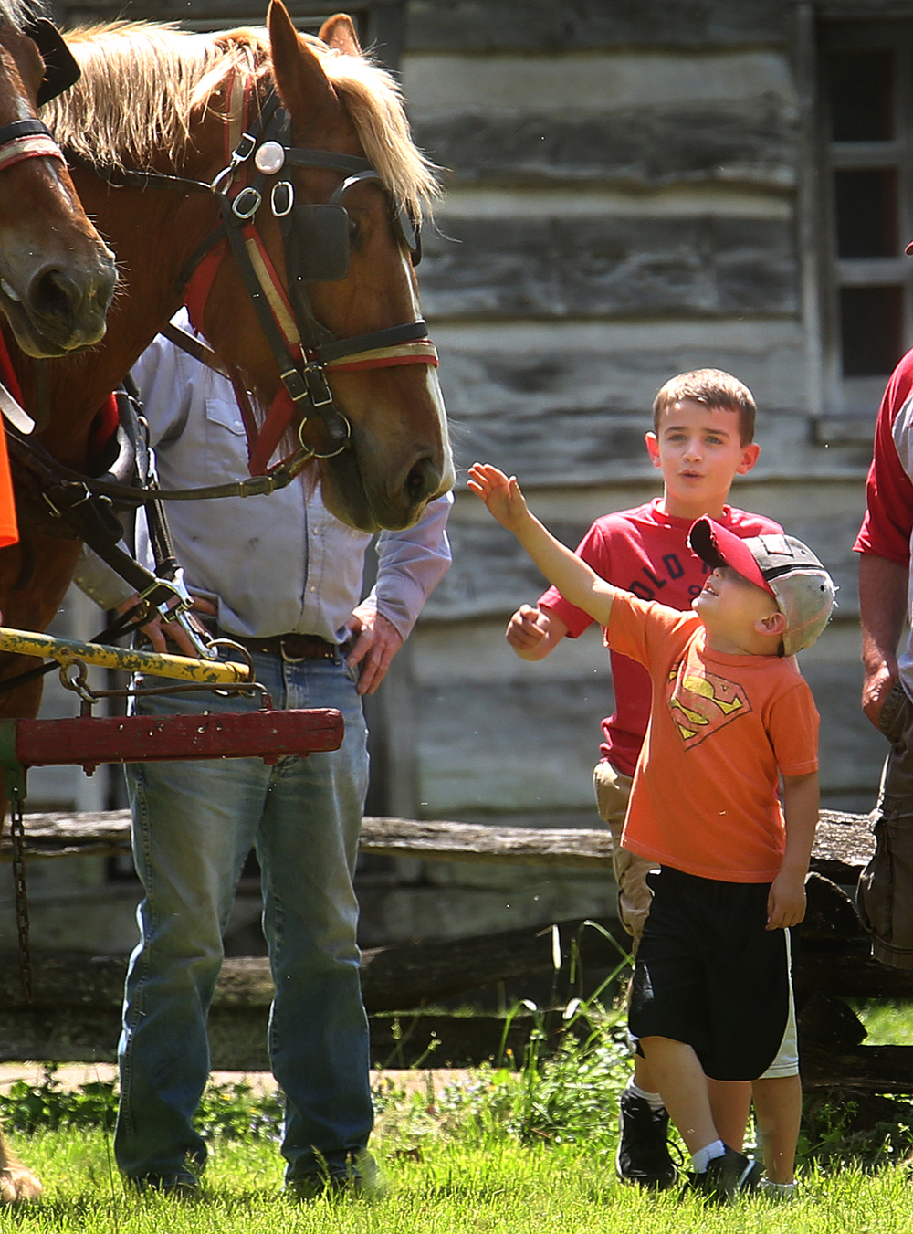 "Kade Gleason, 5, of Springfield at front along with his brother Wyatt Gleason, 7, prepare to greet Belgian draft horse ""Rose"" during a break in the plowing Saturday. 