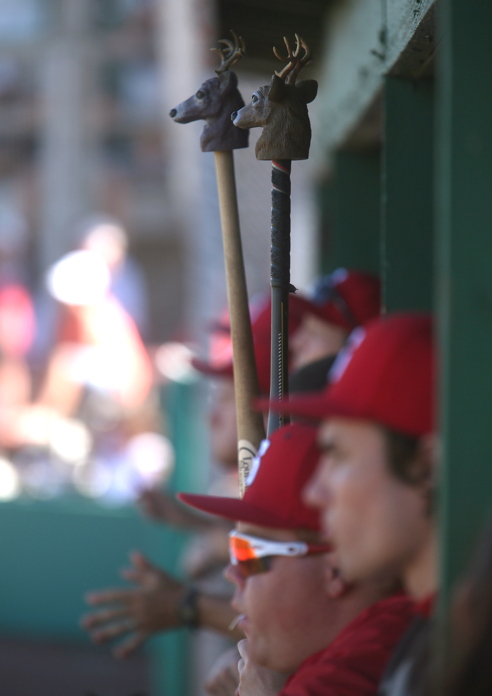 Not taking superstition too far, but certainly a little bit, the Senators held aloft miniature deer heads stuck on baseball bats from the dugout during the game, and wouldn't you know? It seemed to work Thursday night with a Senators win. David Spencer/The State Journal-Register