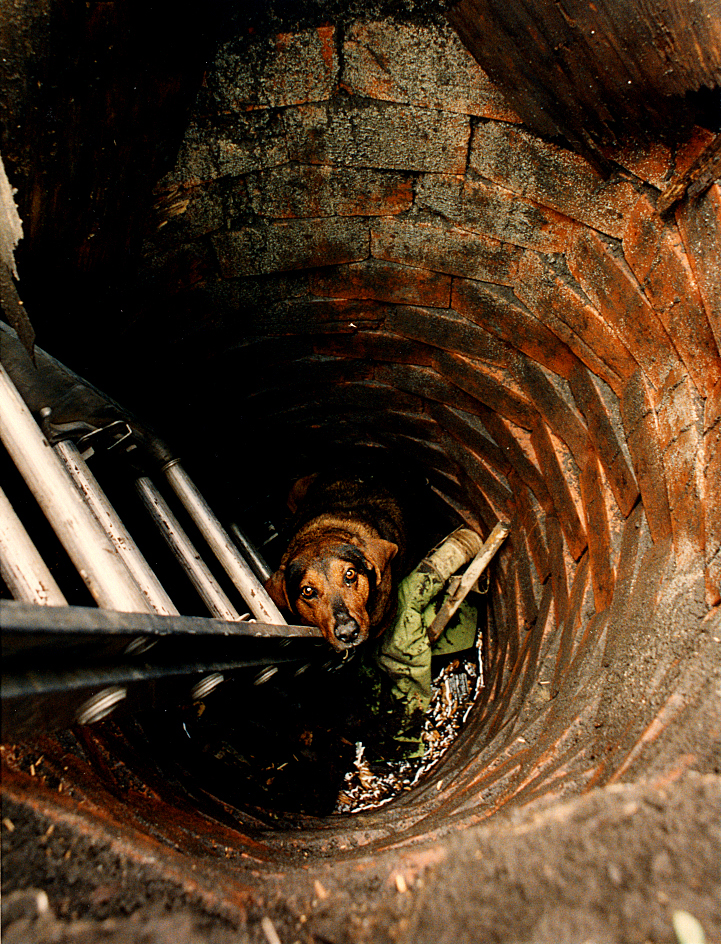 In April, 1992, a happy ending, thanks to rescuers Kevin Russell, a Sangamon County animal control officer and Springfield police officer Jack Clifford, awaited this nameless stray mutt who found herself trapped at the bottom of an abandoned well behind a home in the 1900 block of East Lawrence Avenue in Springfield. The dog had fallen through rotting plywood that covered the well. When I arrived on the scene, a ladder, which can be seen at left in photo, had just been lowered into the well. Concerned resident Ruth Holder had called police about the dog's plight, and it was stranded for 30 minutes before her freedom was secured. David Spencer/The State Journal-Register