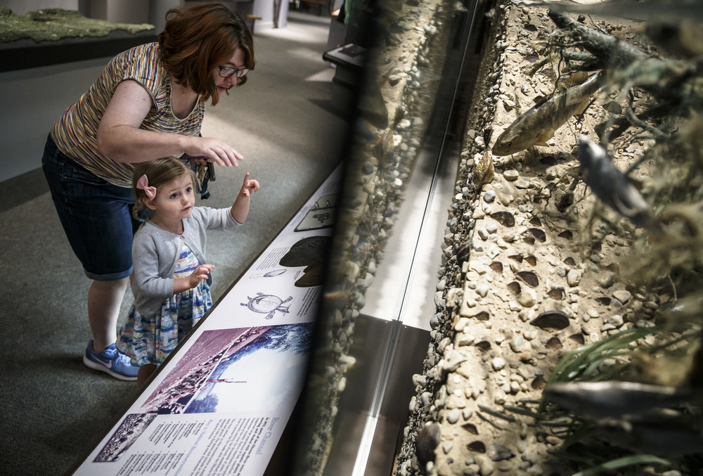 "Audrey Reynolds, 3, points out all of the different fish in the Illinois River diorama while exploring the Changes exhibit with her grandmother, Chris Schnake, during the reopening of the Illinois State Museum, Saturday, July 2, 2016, in Springfield, Ill. ""She loves animals and has named them all as we've gone through,"" said Schnake of the visit to the museum with her granddaughter. Justin L. Fowler/The State Journal-Register"
