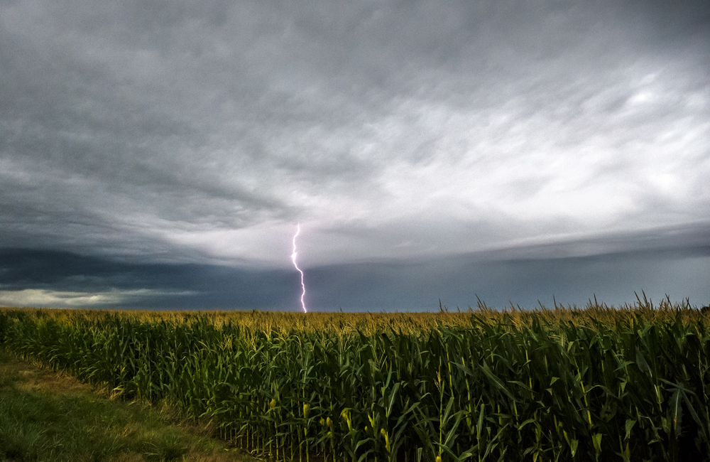 A lightning bolt strikes from a line of heavy storms moving east over a corn field along South Farmingdale Road, Tuesday, July 19, 2016, west of Curran, Ill. Justin L. Fowler/The State Journal-Register