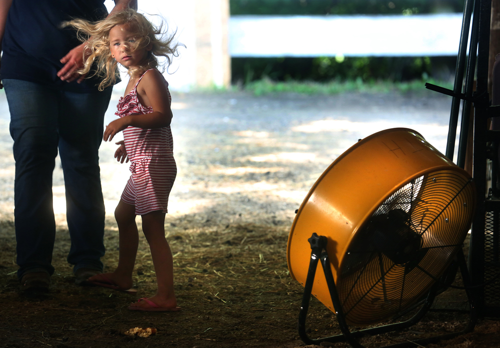 Oppresive heat got a brief respite for fair goer Lennon Arbogast, 4, of Petersburg, whose hair was blowing as she walked by a portable fan set up inside the show ring barn at the fairgrounds on Tuesday. The 2016 Menard County Fair in Petersburg opened for a six day run on Tuesday, July 19, 2016 and will end Sunday. Highlights scheduled this year include the Queen Pageant on Tuesday evening, an Antique Tractor Pull Wednesday night, Barnyard Olympics at the Grandstand Thursday night, a concert featuring the Brothers Osborne and Canaan Smith Friday night, Tractor & Truck Pull and fireworks Saturday night and a demolition derby to wrap up the fair Sunday night, in addition to a carnival, food, exhibits and entertainment throughout the run of the fair. David Spencer/The State Journal-Register