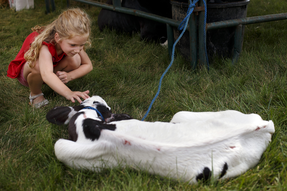 Milla Moore pets Lacie, a 10-day-old baby Holstein calf, during the Sangamon County Farm Bureau's Ag-Stravaganza event at Sugar Creek United Methodist Church Monday, Aug. 1, 2016. More than 300 kids and 85 families filed through the exhibits which included livestock, bees and a corn and garden display. Participants could talk with farmers and ask them about genetically modified crops, animal husbandry and more during the free event. Ted Schurter/The State Journal-Register
