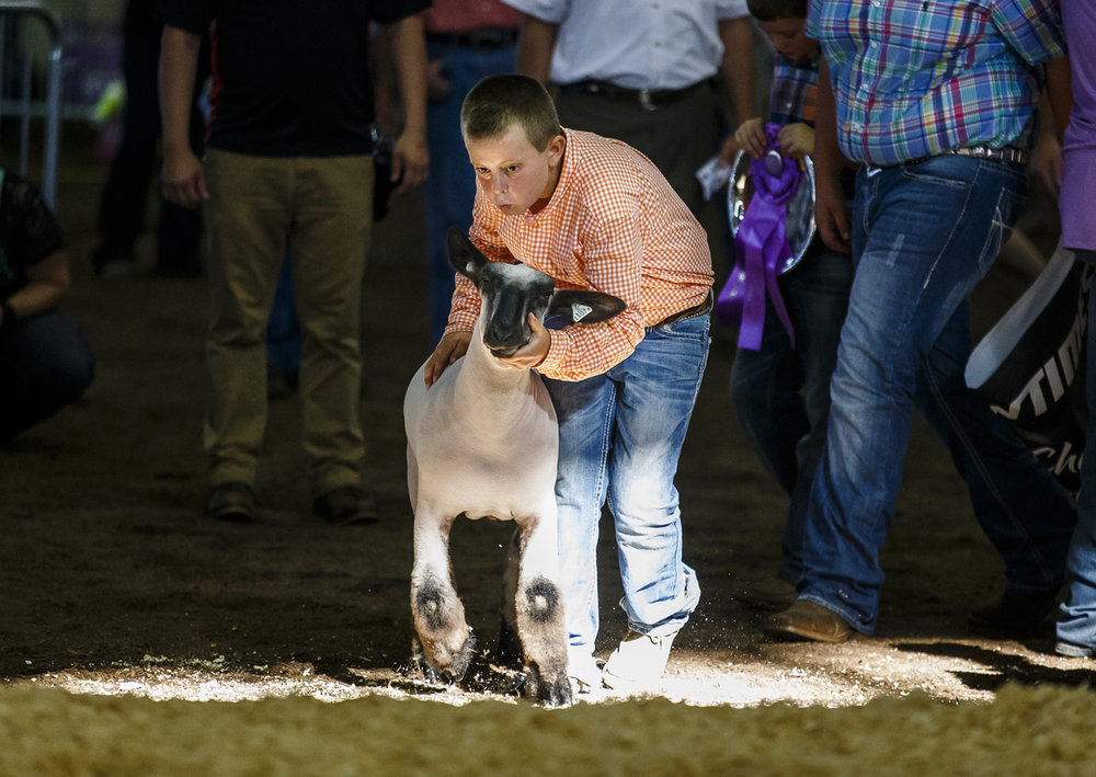 Dylan Hummel blows of the ear of one of his Grand Champion Meat Goat Wethers as he brings him up to the stage during the 2016 Illinois State Fair Grand Champions Auction inside the Coliseum at the Illinois State Fairgrounds, Tuesday, Aug. 16, 2016, in Springfield, Ill. Justin L. Fowler/The State Journal-Register