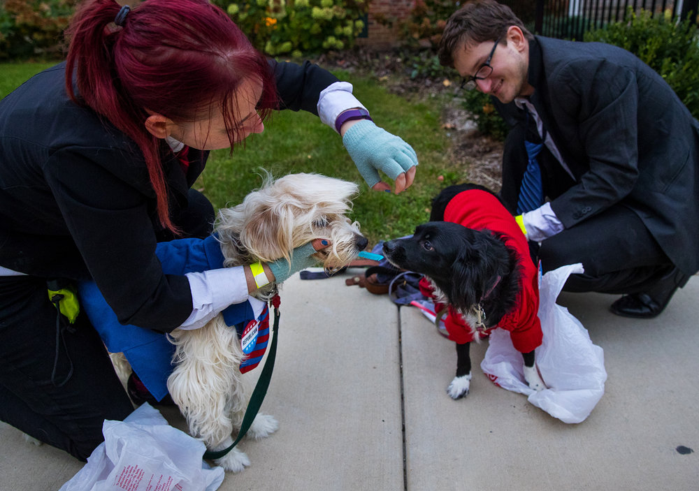 Brie Urbanec coifs her dog Henry's hair as she prepares his Donald Trump costume as her husband Jordan gets their dog Madelynne into her Hillary pantsuit during the Pups and Pints fundraising event for the Illinois Humane Society at  Obed & Isaac's Thursday, Oct. 20, 2016. Dogs and their owners could compete in a costume contest, a joint pie eating contest or have their portrait made. Urbanec said that whatever the outcome of the contest, Henry, as candidate Trump, would accept the outcome. Ted Schurter/The State Journal-Register