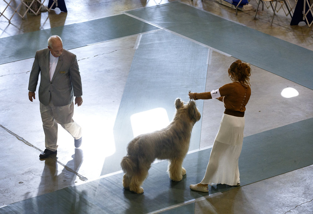 Sally Boland and Sinatra, a Briard, are judged by Gary Newton in the herding group during the AKC sanctioned Prairieland Classic Dog Show in the Exposition Building at the Illinois State Fairgrounds Sunday, Oct. 23, 2016. Rich Saal/The State Journal-Register