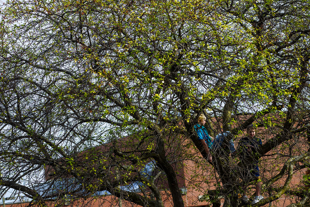 "A pair of boys watch the finish line from the in the branches of a tree during the Girls on the Run ""Be Your Own Super Hero"" 5k on the campus of Lincoln Land Community College Saturday, Nov. 5, 2016. The run is the culmination of a 10-week program which focuses on teaching self-respect and healthy lifestyle choices. Ted Schurter/The State Journal-Register"