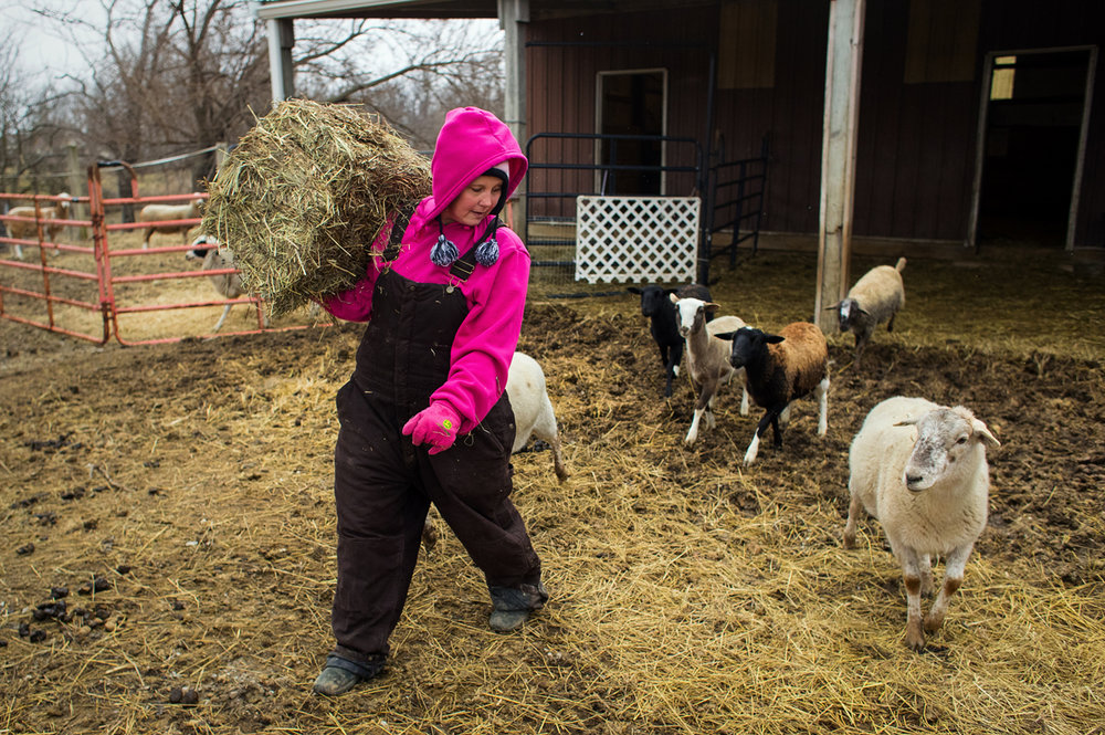 Christie Rincker prepares to feed her sheep on her rural Sangamon County property Friday, Jan. 27, 2017. Rincker and her husband are hoping the county board will allow them to exchange the variance they have to operate a dog kennel and instead open a business that includes dog herding training, agility training and agility trails. Ted Schurter/The State Journal-Register