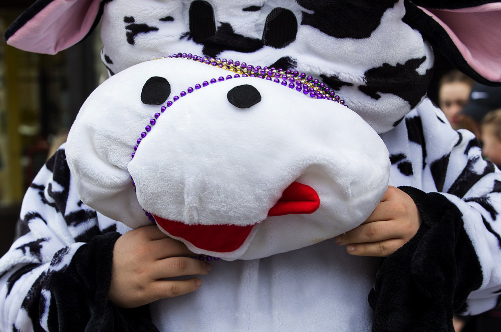 Wrangling a pair of beads past an oversized nose is a challenge for a cow mascot along the parade route during the St. Patrick's Day Parade Saturday, March 11, 2017. [Ted Schurter/The State Journal-Register]