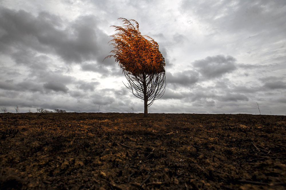 The charred remains of a small cedar tree stand among the scorched landscape of Centennial Park created from a prairie burn last month as heavy cloud cover moves in ahead of potential severe weather, Monday, March 6, 2017, in Springfield, Ill. Justin L. Fowler/The State Journal-Register