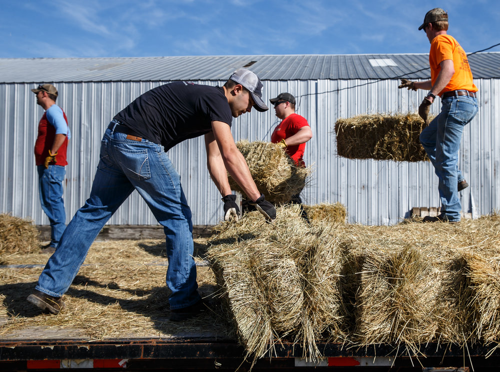Evan Marr, center, of Jacksonville, Ill., loads up bales of hay  into a semi-trailer along with volunteers with the Cass-Morgan Farm Bureau Young Leaders for a wildfire relief donation drive at Jackson Farms, Friday, March 24, 2017, in Jacksonville, Ill. Marr originally had an idea to drive a single load of hay to aid the Kansas livestock farms devastated by wildfires, but the idea blossomed into a convey of around 10 trucks full of supplies and hay. [Justin L. Fowler/The State Journal-Register]