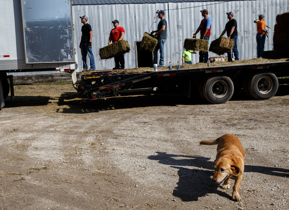 Lilly, a Jackson family dog, checks in on the action as volunteers from the Cass-Morgan Farm Bureau Young Leaders load up bales of hay into a semi-trailer for a wildfire relief donation drive at Jackson Farms, Friday, March 24, 2017, in Jacksonville, Ill. The hay and supplies donated from around central Illinois is being taken by convoy to aid the Kansas livestock farms devastated by wildfires. [Justin L. Fowler/The State Journal-Register]